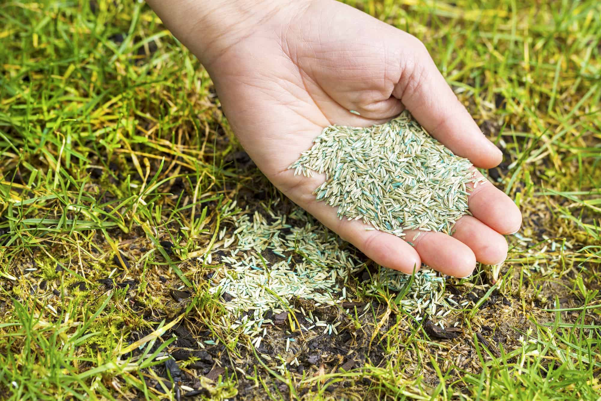 How Long Can I Keep Grass Seed?