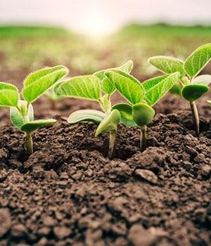 12. Spindly Seedlings
