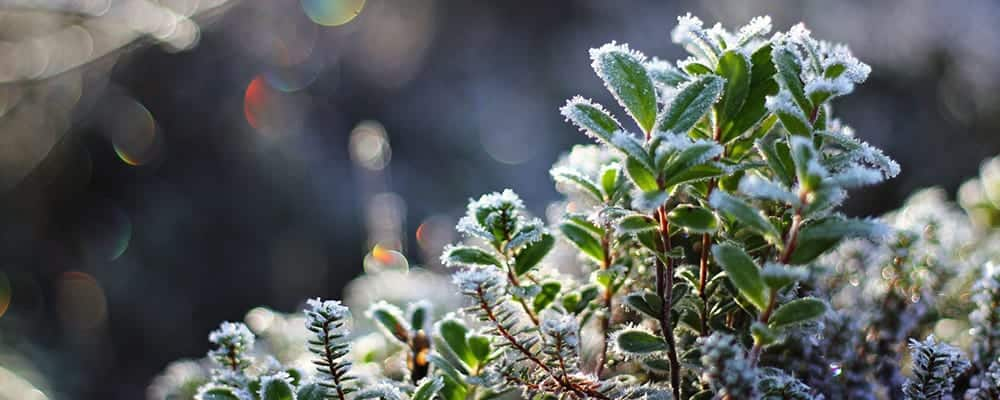 3. Knowing Your Frost Dates