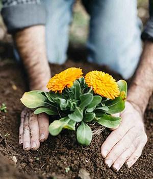 3. Planting Diary