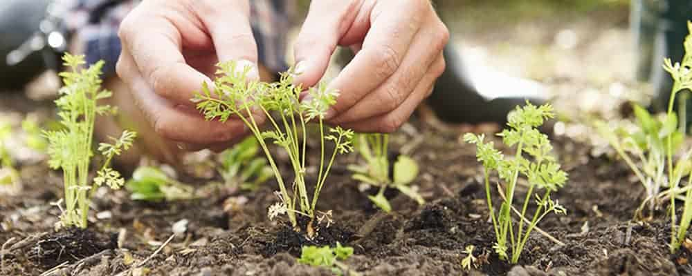 4. Getting Started Pre-planting Tips