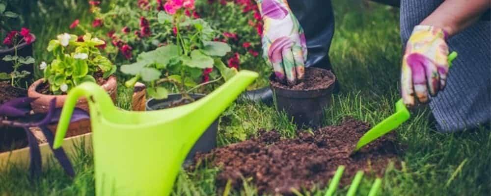 6. Planting & Potting Tips