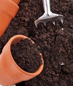 6. Prepare the potting soil