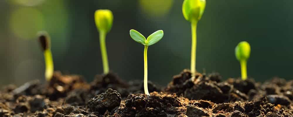 7. Common Seedling Problems To Expect