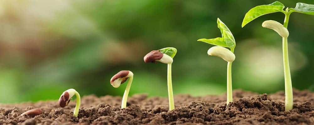 8. Conclusion From Seed To Plant