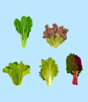 14Chard, Spinach, or Kale