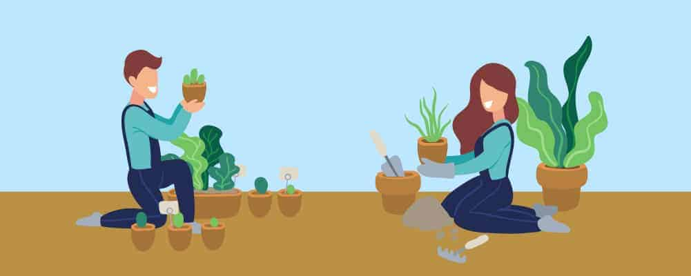 7 How to choose which to plant