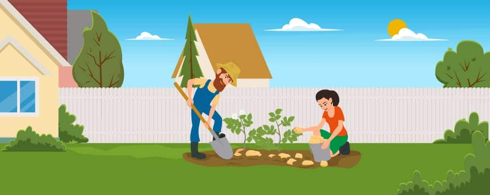 8 When to plant your vegetables