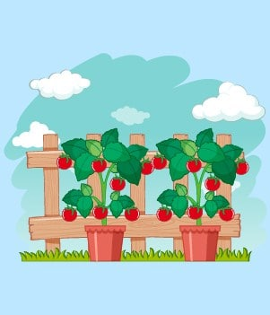 9Tomatoes (bush variety or cherry are easiest)